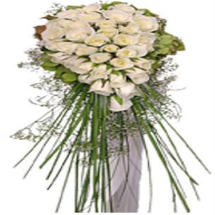 Beyaz Çiçekler Gelin Çiçeği