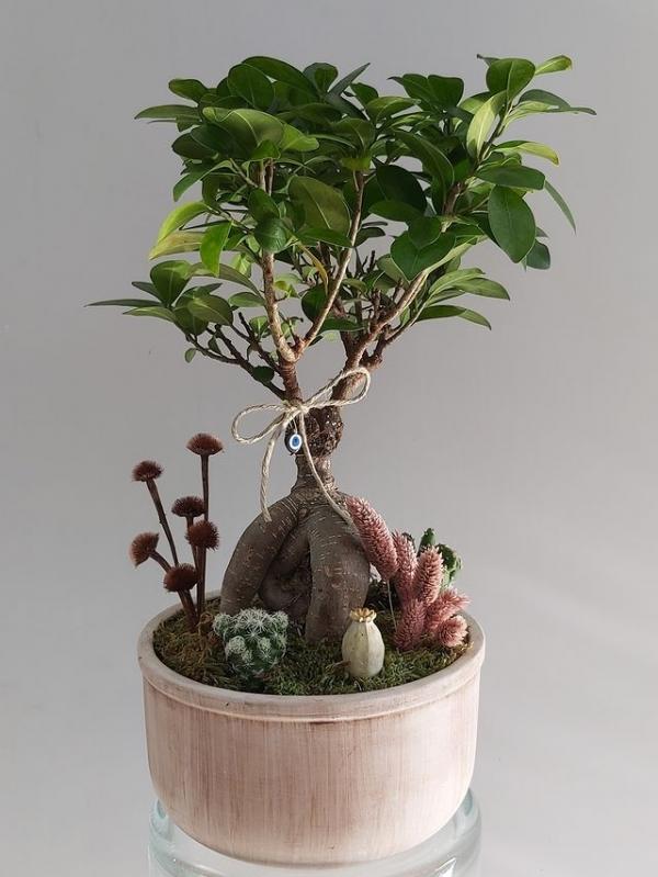 Dekoratif Bonzai Ağaç