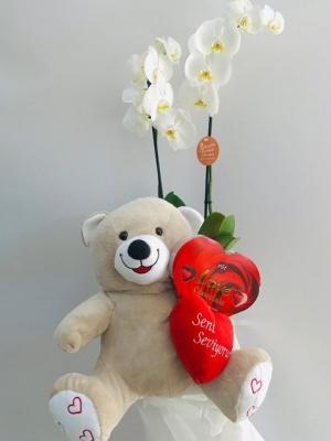 Orkide - Ayıcık - Çikolata - Kalp Yastık
